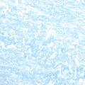 ¼ Toner B4743 Deep Blue